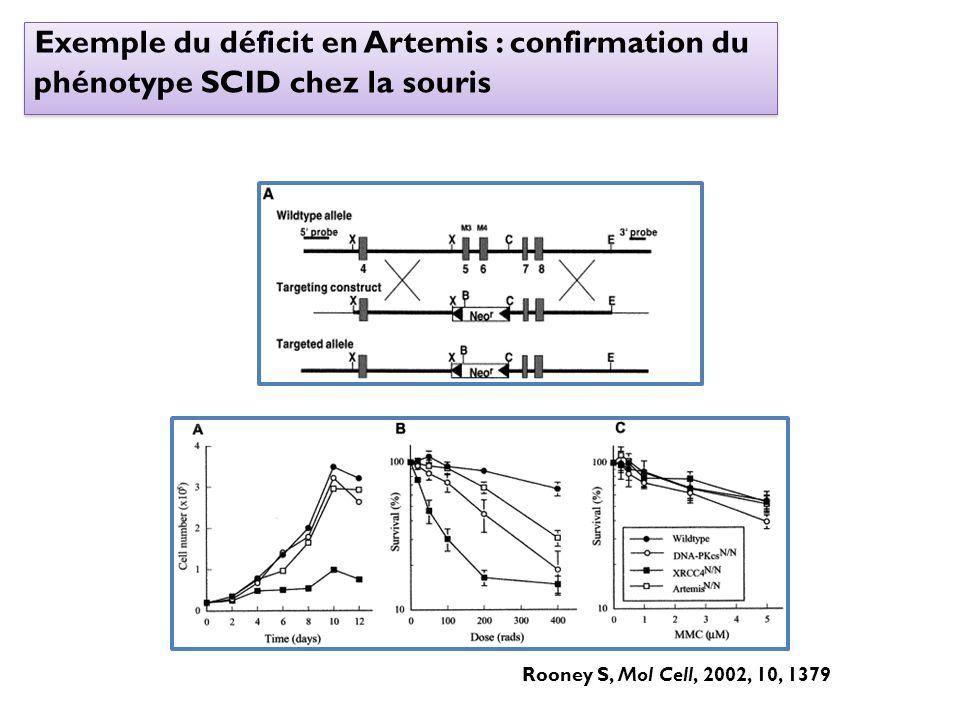 Exemple du déficit en Artemis : confirmation du phénotype SCID chez la souris Rooney S, Mol Cell, 2002, 10, 1379