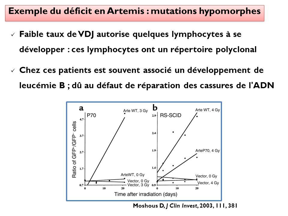 Faible taux de VDJ autorise quelques lymphocytes à se développer : ces lymphocytes ont un répertoire polyclonal Chez ces patients est souvent associé