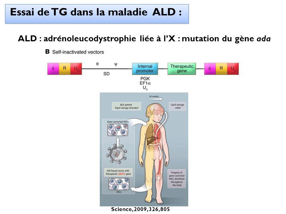 Essai de TG dans la maladie ALD : ALD : adrénoleucodystrophie liée à lX : mutation du gène ada Science, 2009, 326, 805