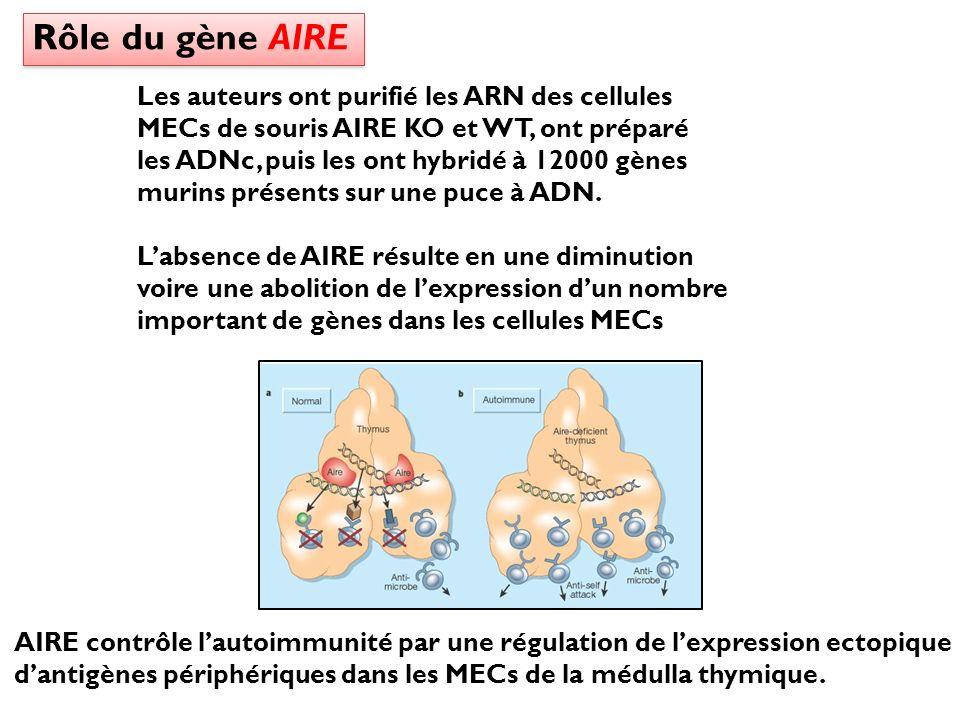 AIRE contrôle lautoimmunité par une régulation de lexpression ectopique dantigènes périphériques dans les MECs de la médulla thymique. Les auteurs ont