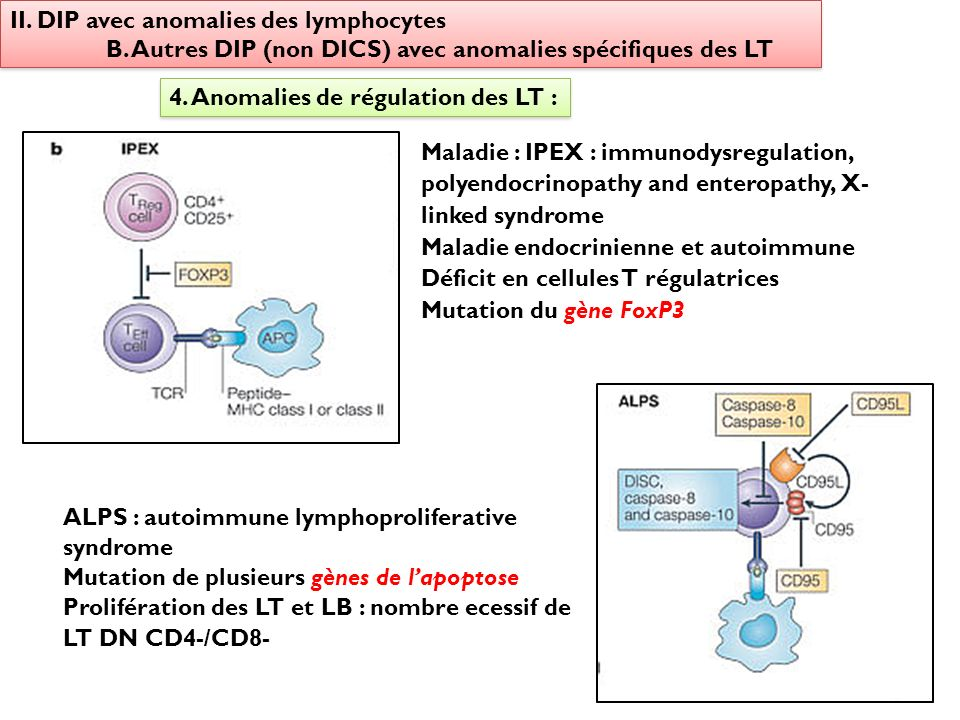 II. DIP avec anomalies des lymphocytes B. Autres DIP (non DICS) avec anomalies spécifiques des LT II. DIP avec anomalies des lymphocytes B. Autres DIP