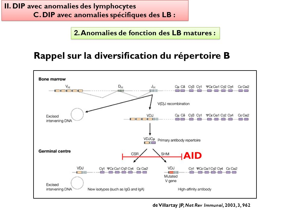 II. DIP avec anomalies des lymphocytes C. DIP avec anomalies spécifiques des LB : II. DIP avec anomalies des lymphocytes C. DIP avec anomalies spécifi