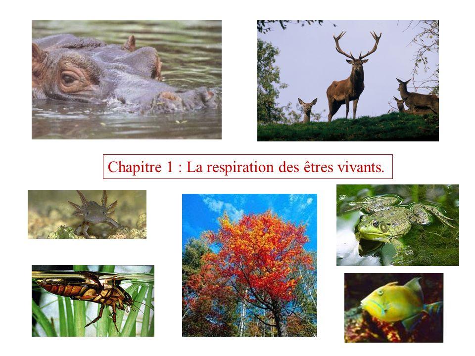 Chapitre 1 : La respiration des êtres vivants.