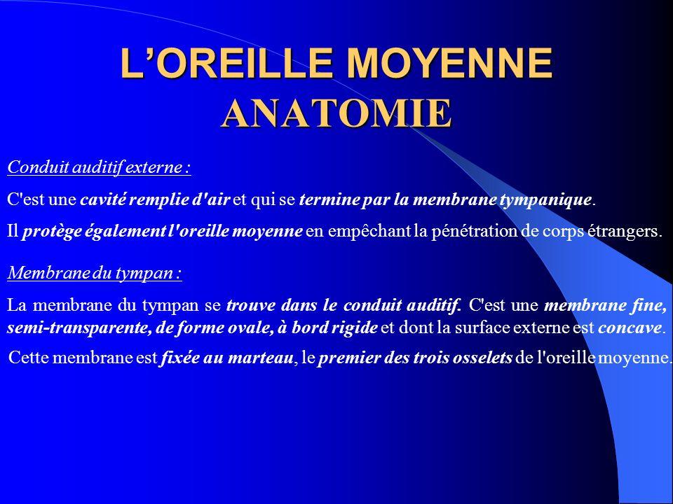 LOREILLE MOYENNE ANATOMIE Conduit auditif externe : C'est une cavité remplie d'air et qui se termine par la membrane tympanique. Il protège également