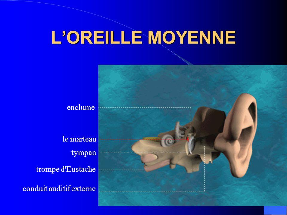 LOREILLE MOYENNE enclume le marteau tympan conduit auditif externe trompe d'Eustache