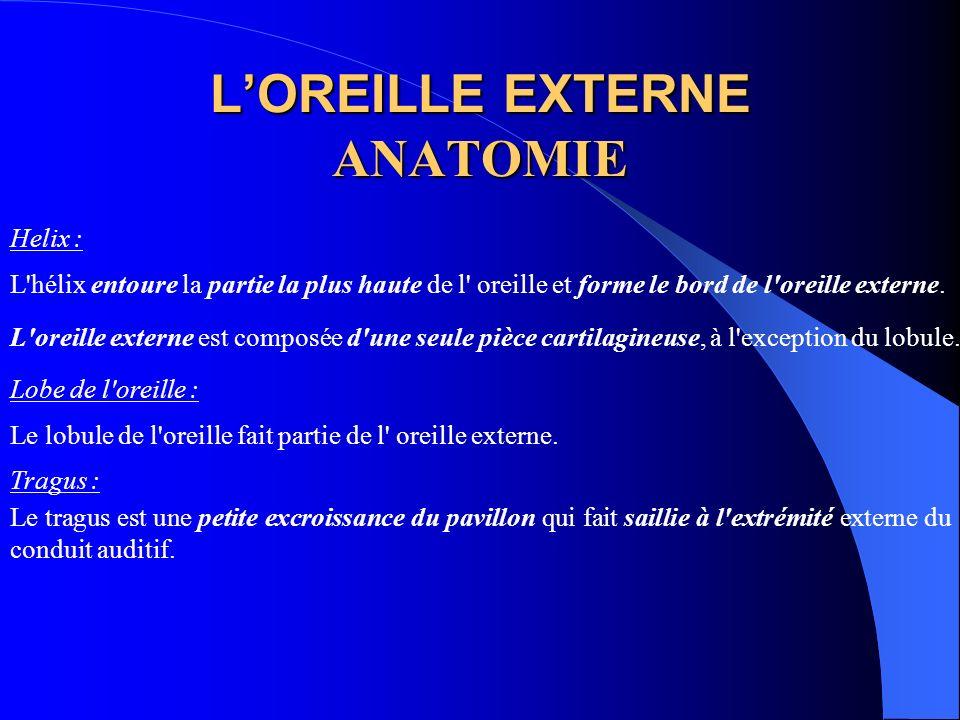 LOREILLE EXTERNE ANATOMIE Helix : L'hélix entoure la partie la plus haute de l' oreille et forme le bord de l'oreille externe. L'oreille externe est c