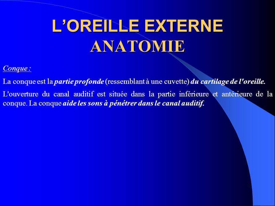 LOREILLE EXTERNE ANATOMIE Conque : La conque est la partie profonde (ressemblant à une cuvette) du cartilage de l'oreille. L'ouverture du canal auditi