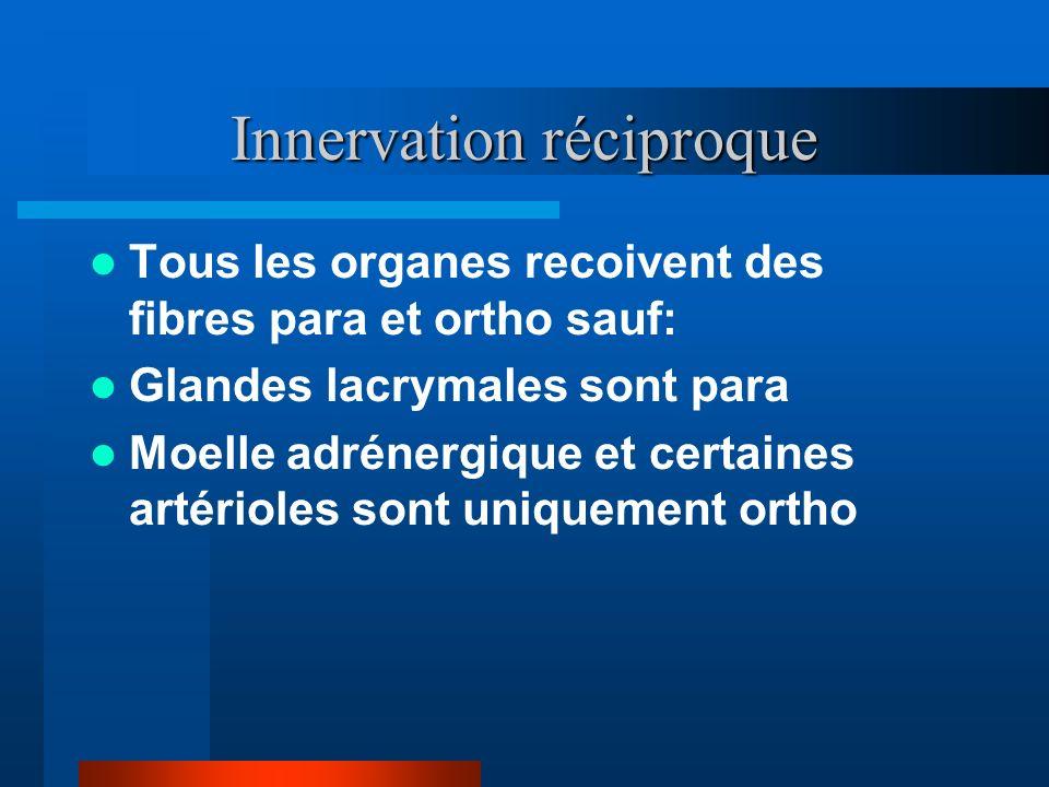 Innervation réciproque Tous les organes recoivent des fibres para et ortho sauf: Glandes lacrymales sont para Moelle adrénergique et certaines artério