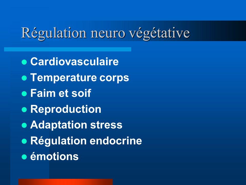 Régulation neuro végétative Cardiovasculaire Temperature corps Faim et soif Reproduction Adaptation stress Régulation endocrine émotions