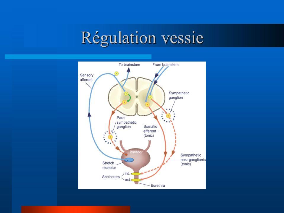 Régulation vessie