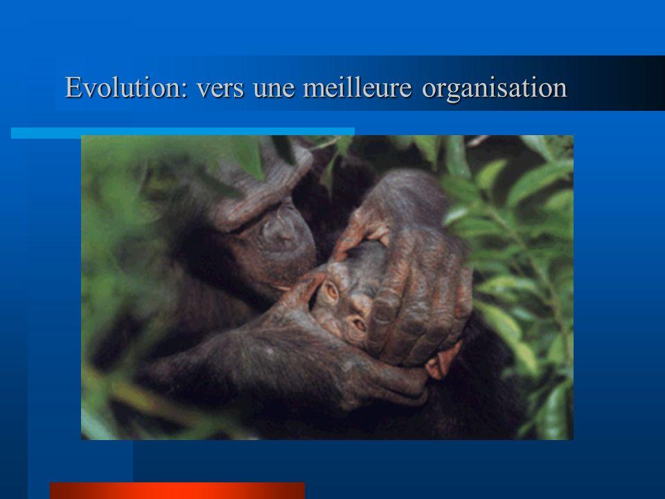 Evolution: vers une meilleure organisation Evolution: vers une meilleure organisation