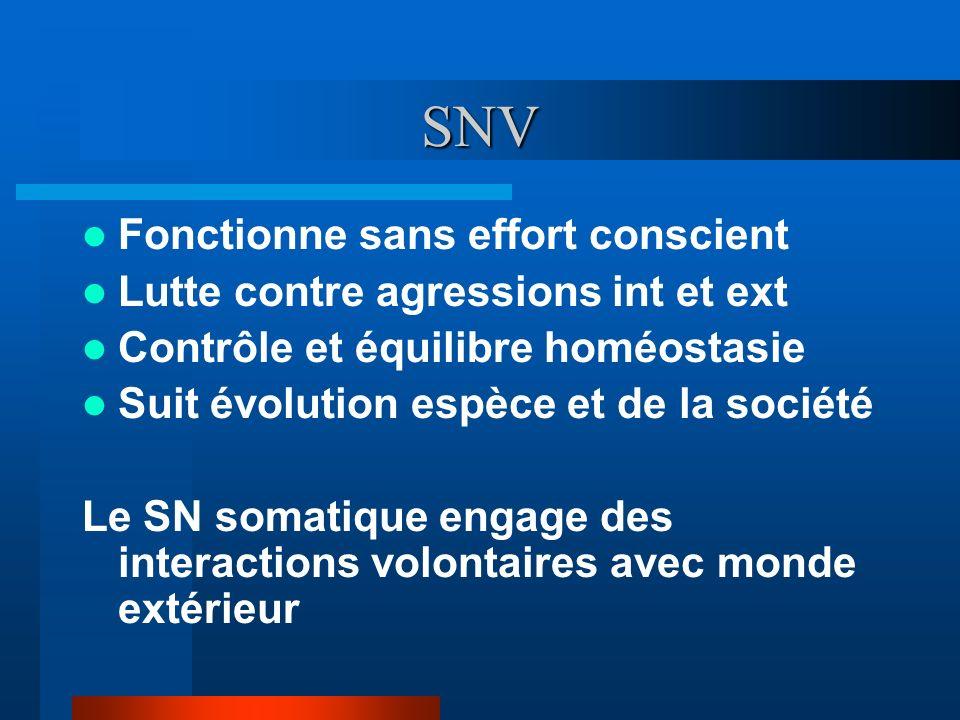 SNV Fonctionne sans effort conscient Lutte contre agressions int et ext Contrôle et équilibre homéostasie Suit évolution espèce et de la société Le SN