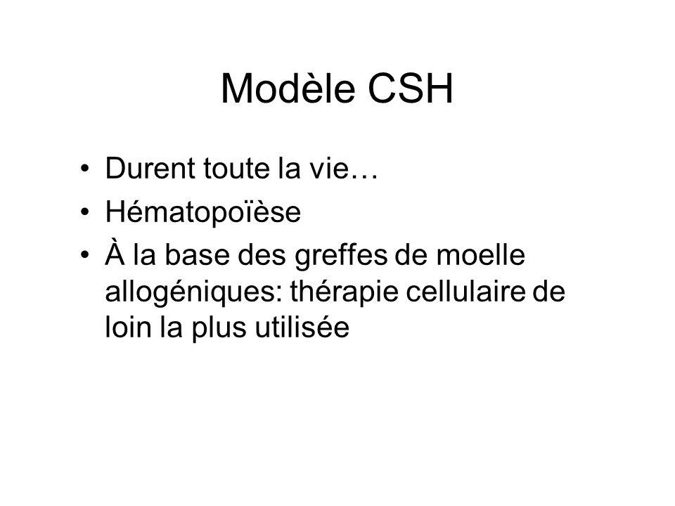 Modèle CSH Durent toute la vie… Hématopoïèse À la base des greffes de moelle allogéniques: thérapie cellulaire de loin la plus utilisée