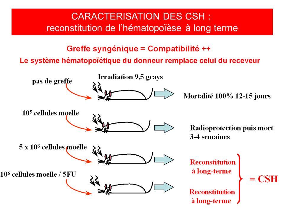 CARACTERISATION DES CSH : reconstitution de lhématopoïèse à long terme