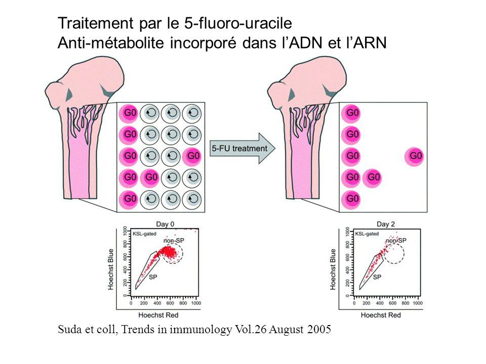 Suda et coll, Trends in immunology Vol.26 August 2005 Traitement par le 5-fluoro-uracile Anti-métabolite incorporé dans lADN et lARN