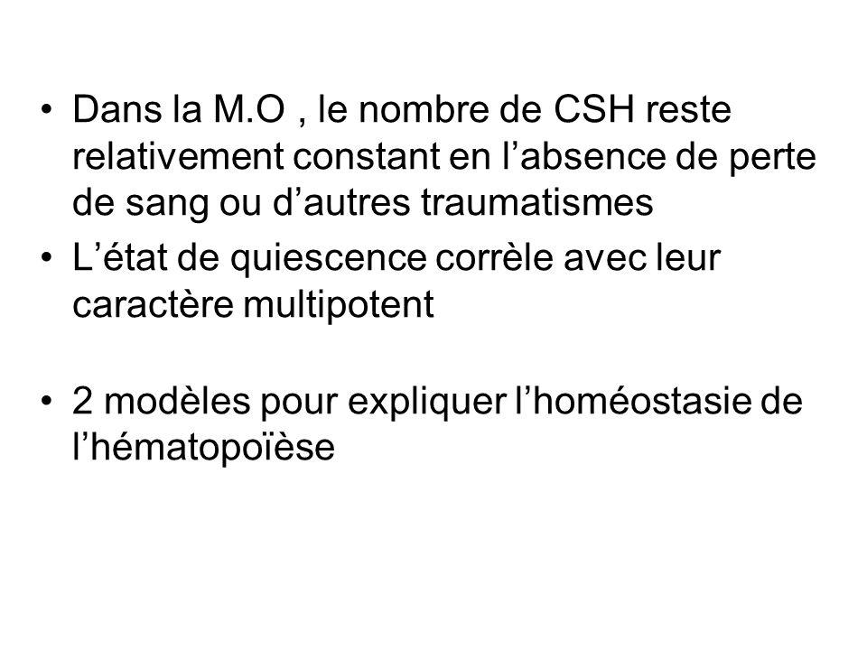 Caractéristiques des CSH Dans la M.O, le nombre de CSH reste relativement constant en labsence de perte de sang ou dautres traumatismes Létat de quies
