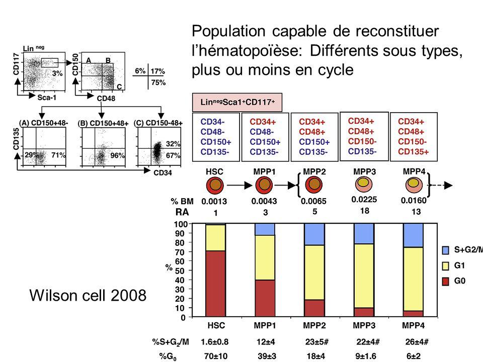 Wilson cell 2008 Population capable de reconstituer lhématopoïèse: Différents sous types, plus ou moins en cycle