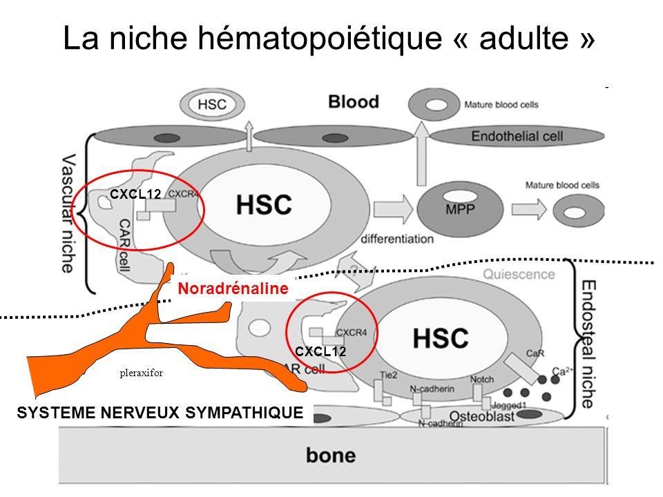 CXCL12 SYSTEME NERVEUX SYMPATHIQUE Noradrénaline pleraxifor