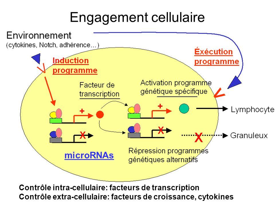 microRNAs Engagement cellulaire Contrôle intra-cellulaire: facteurs de transcription Contrôle extra-cellulaire: facteurs de croissance, cytokines