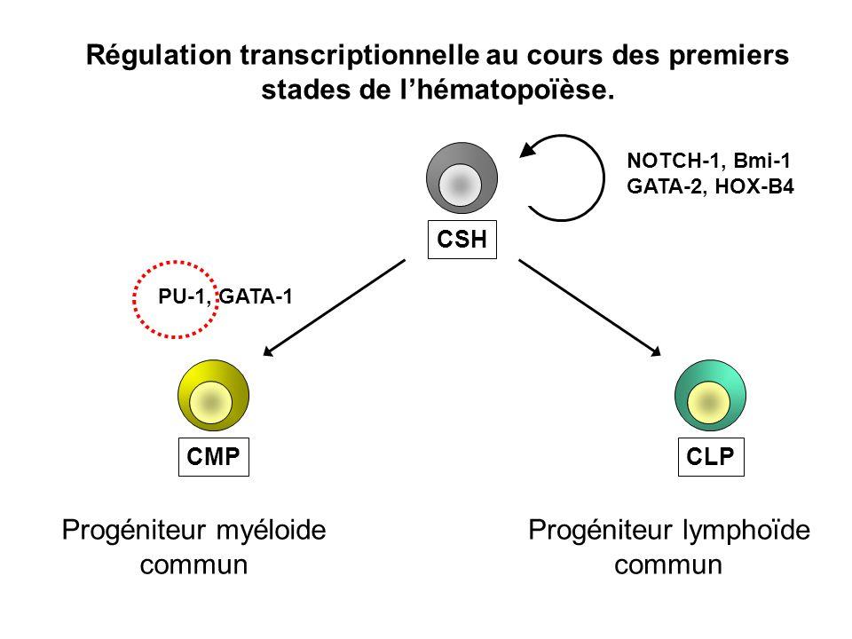 CSHCLPCMP NOTCH-1, Bmi-1 GATA-2, HOX-B4 PU-1, GATA-1 Régulation transcriptionnelle au cours des premiers stades de lhématopoïèse. Progéniteur myéloide