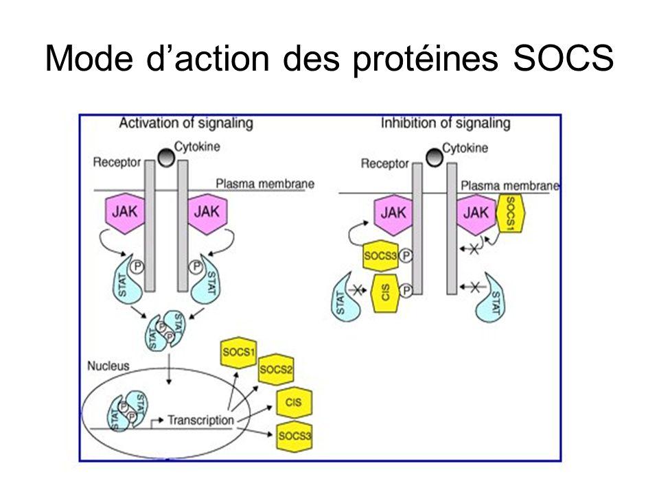 Mode daction des protéines SOCS