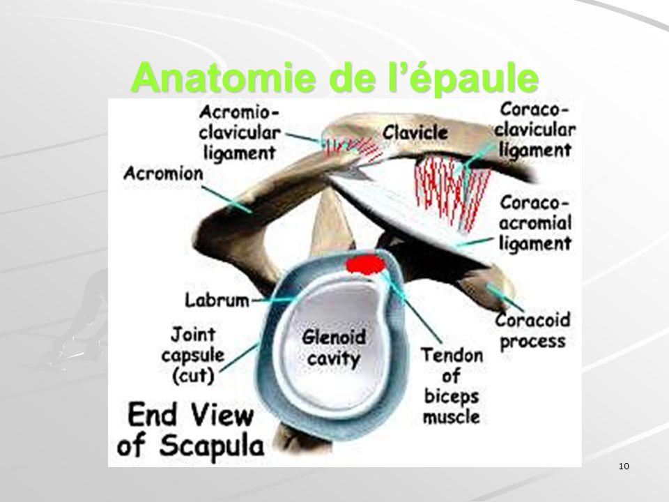 10 Anatomie de lépaule
