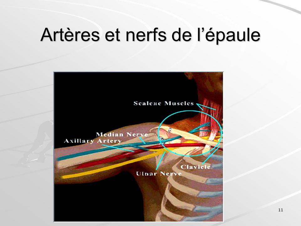11 Artères et nerfs de lépaule