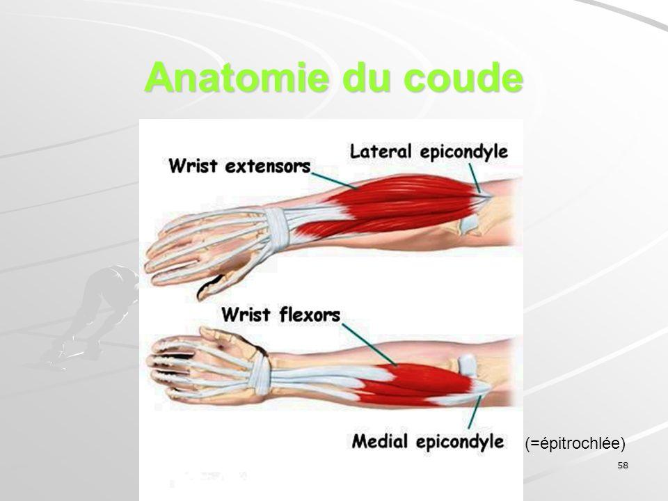 58 Anatomie du coude (=épitrochlée)