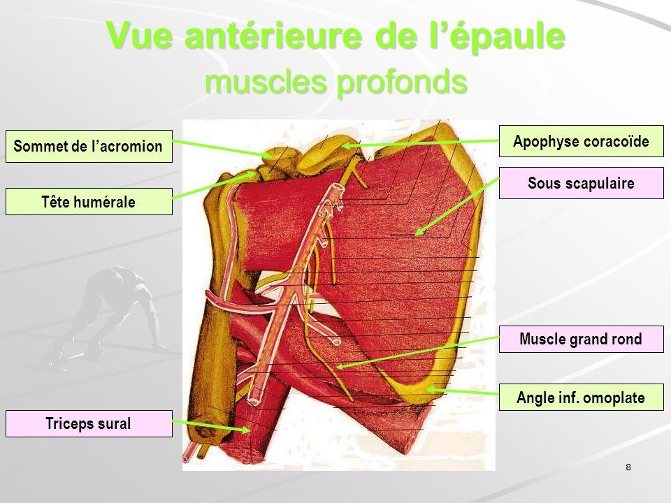 8 Vue antérieure de lépaule muscles profonds Sommet de lacromion Tête humérale Sous scapulaire Muscle grand rond Angle inf. omoplate Triceps sural Apo