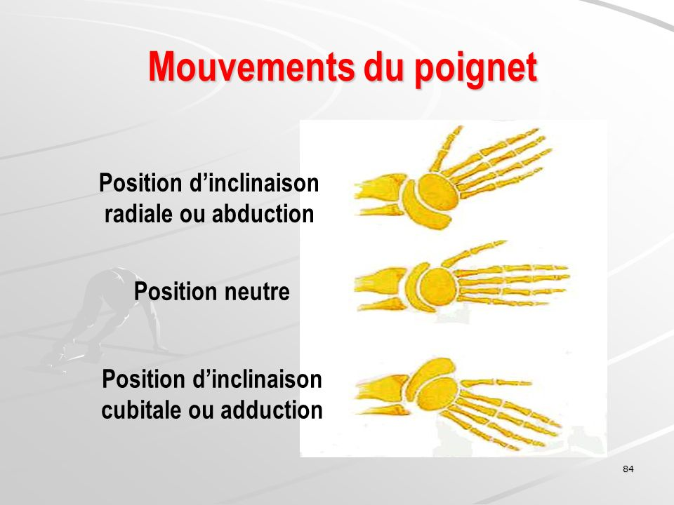 84 Mouvements du poignet Position dinclinaison radiale ou abduction Position neutre Position dinclinaison cubitale ou adduction