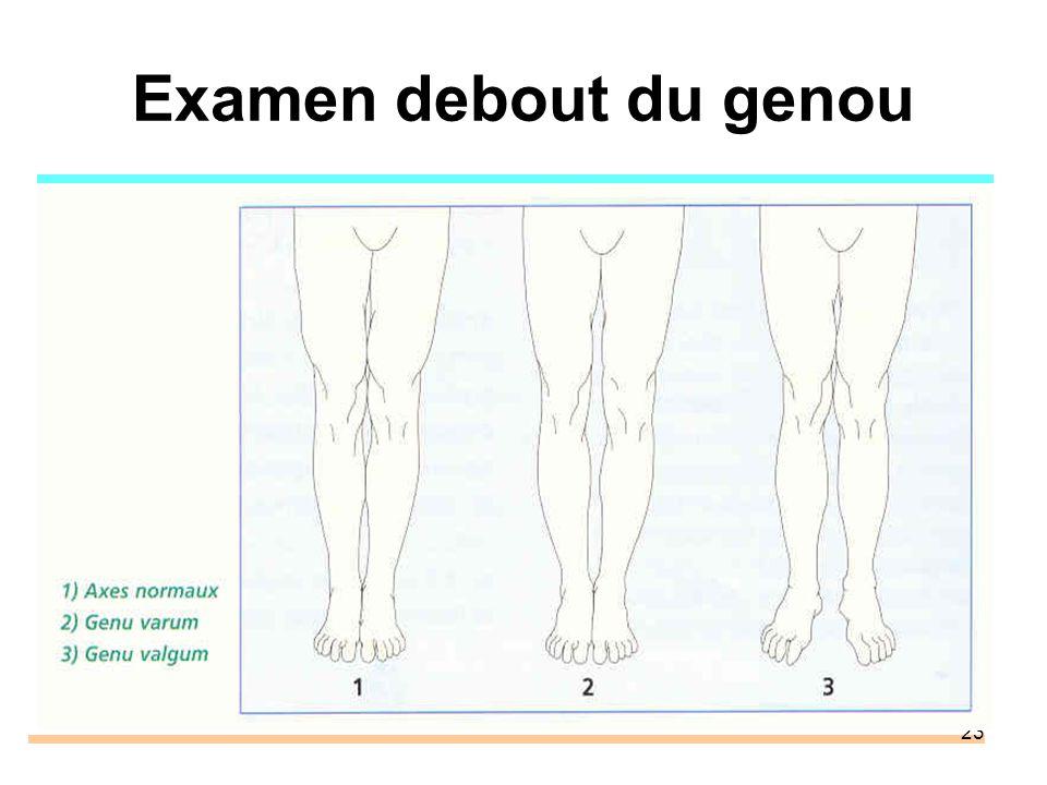 23 Examen debout du genou