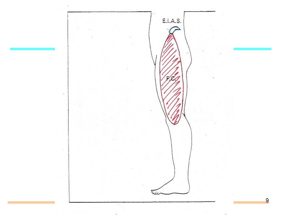30 Tendinite de la patte doie Irritation insertion tendineuse muscles de la patte d oie (couturier, droit interne, demi-tendineux) + leurs bourses séreuses.