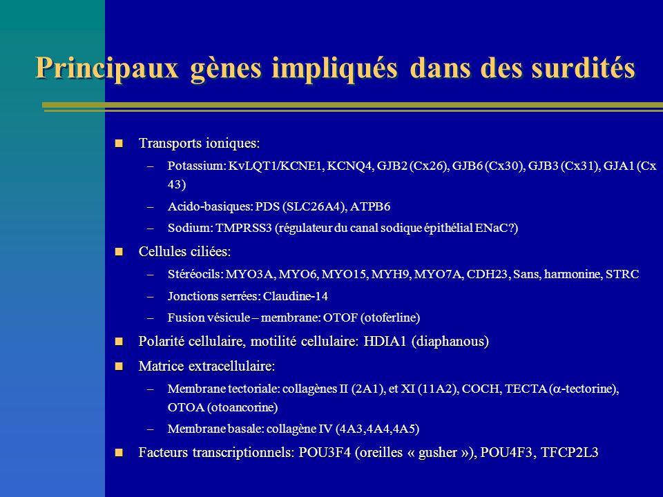 Principaux gènes impliqués dans des surdités Transports ioniques: Transports ioniques: –Potassium: KvLQT1/KCNE1, KCNQ4, GJB2 (Cx26), GJB6 (Cx30), GJB3