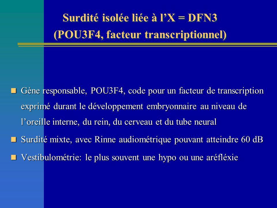 Surdité isolée liée à lX = DFN3 (POU3F4, facteur transcriptionnel) Gène responsable, POU3F4, code pour un facteur de transcription exprimé durant le d