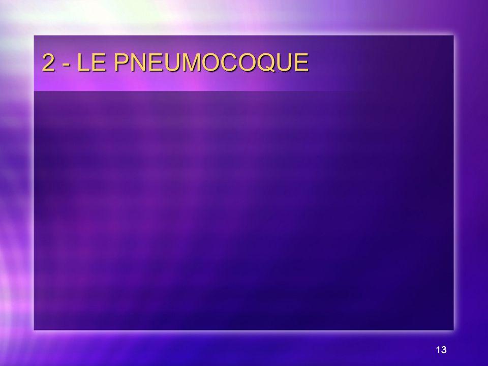 13 2 - LE PNEUMOCOQUE