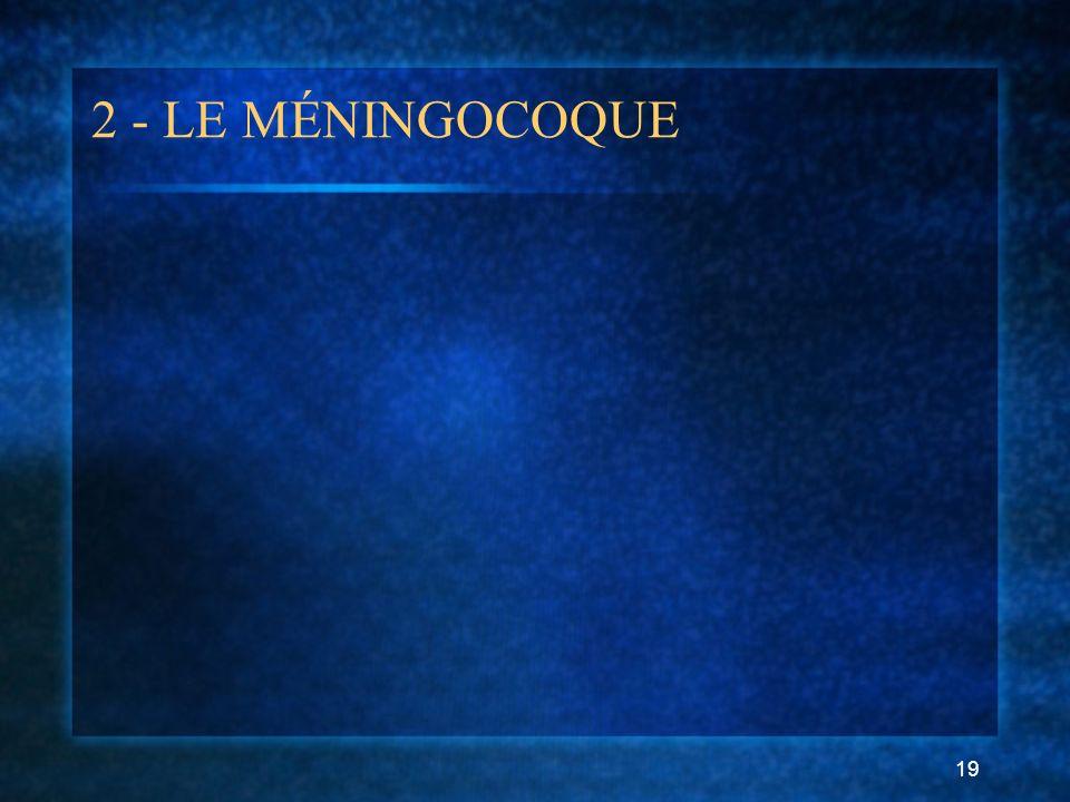 19 2 - LE MÉNINGOCOQUE