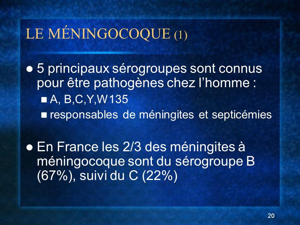 20 LE MÉNINGOCOQUE (1) 5 principaux sérogroupes sont connus pour être pathogènes chez lhomme : A, B,C,Y,W135 responsables de méningites et septicémies En France les 2/3 des méningites à méningocoque sont du sérogroupe B (67%), suivi du C (22%)
