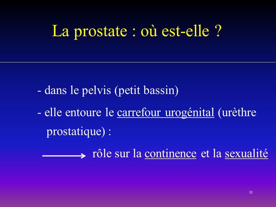 11 La prostate : où est-elle ? - dans le pelvis (petit bassin) - elle entoure le carrefour urogénital (urèthre prostatique) : rôle sur la continence e