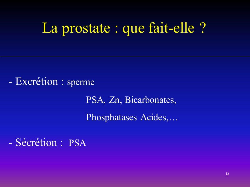 12 La prostate : que fait-elle ? - Excrétion : sperme PSA, Zn, Bicarbonates, Phosphatases Acides,… - Sécrétion : PSA
