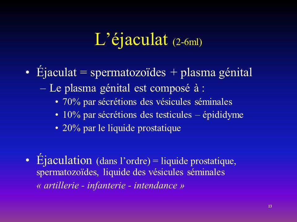 13 Léjaculat (2-6ml) Éjaculat = spermatozoïdes + plasma génital –Le plasma génital est composé à : 70% par sécrétions des vésicules séminales 10% par