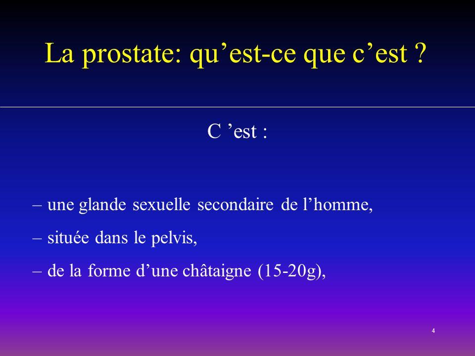 4 La prostate: quest-ce que cest ? C est : –une glande sexuelle secondaire de lhomme, –située dans le pelvis, –de la forme dune châtaigne (15-20g),