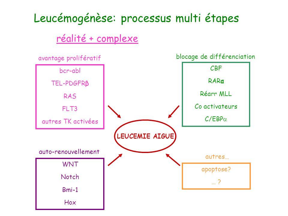Leucémogénèse: processus multi étapes(3) réalité + complexe CBF RARα Réarr MLL Co activateurs C/EBP blocage de différenciation bcr-abl TEL-PDGFRβ RAS