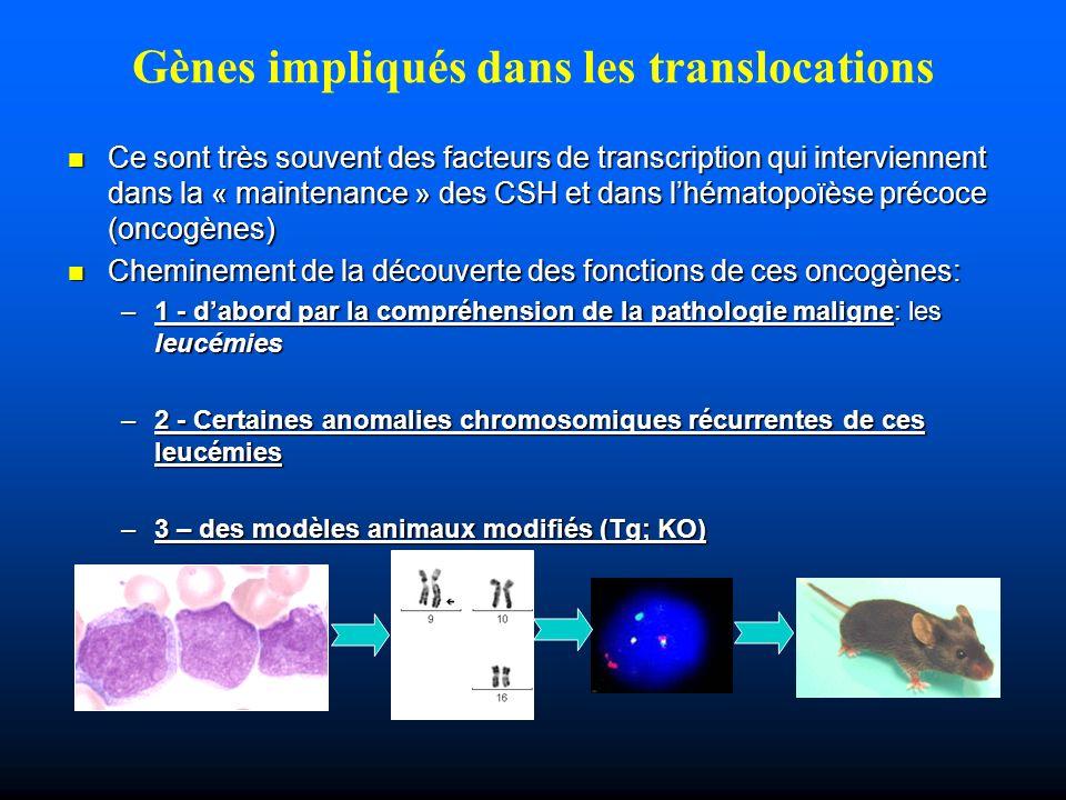 Gènes impliqués dans les translocations Ce sont très souvent des facteurs de transcription qui interviennent dans la « maintenance » des CSH et dans l