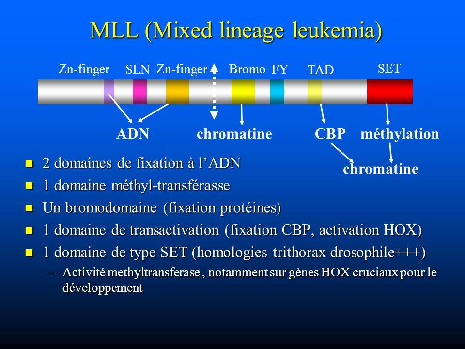 MLL (Mixed lineage leukemia) 2 domaines de fixation à lADN 2 domaines de fixation à lADN 1 domaine méthyl-transférasse 1 domaine méthyl-transférasse U