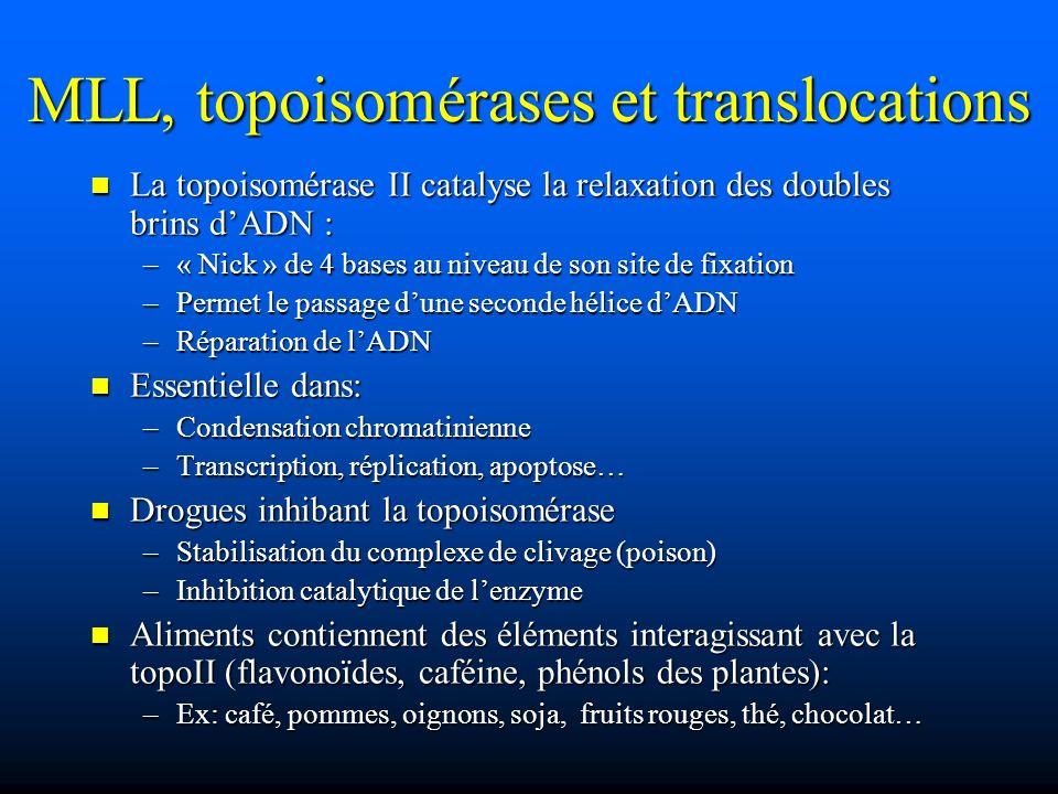 MLL, topoisomérases et translocations La topoisomérase II catalyse la relaxation des doubles brins dADN : La topoisomérase II catalyse la relaxation d
