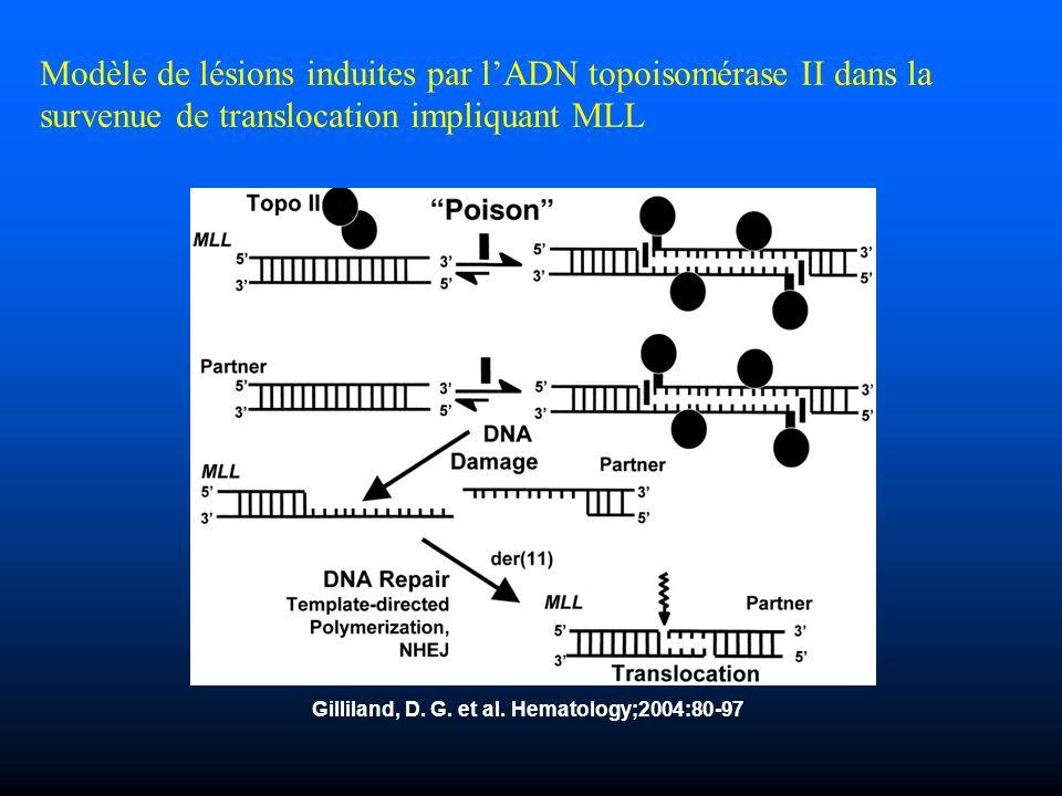 Gilliland, D. G. et al. Hematology;2004:80-97 Modèle de lésions induites par lADN topoisomérase II dans la survenue de translocation impliquant MLL