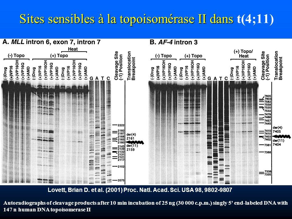 Lovett, Brian D. et al. (2001) Proc. Natl. Acad. Sci. USA 98, 9802-9807 Sites sensibles à la topoisomérase II dans Sites sensibles à la topoisomérase