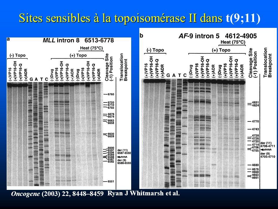 Oncogene (2003) 22, 8448–8459 Ryan J Whitmarsh et al. Sites sensibles à la topoisomérase II dans Sites sensibles à la topoisomérase II dans t(9;11)