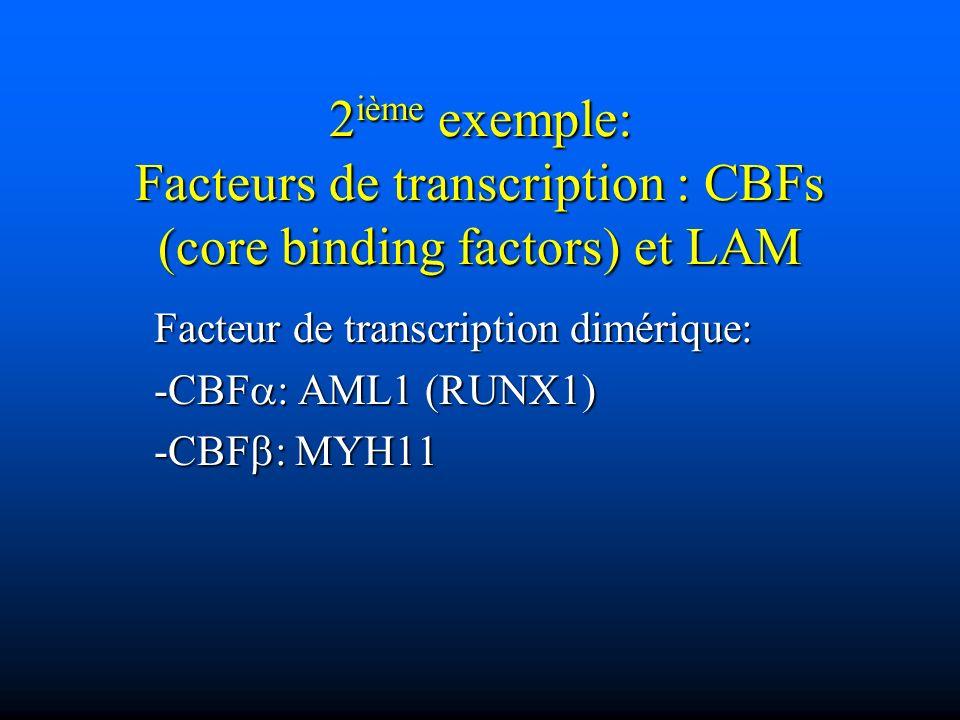 2 ième exemple: Facteurs de transcription : CBFs (core binding factors) et LAM Facteur de transcription dimérique: -CBF : AML1 (RUNX1) -CBF : MYH11
