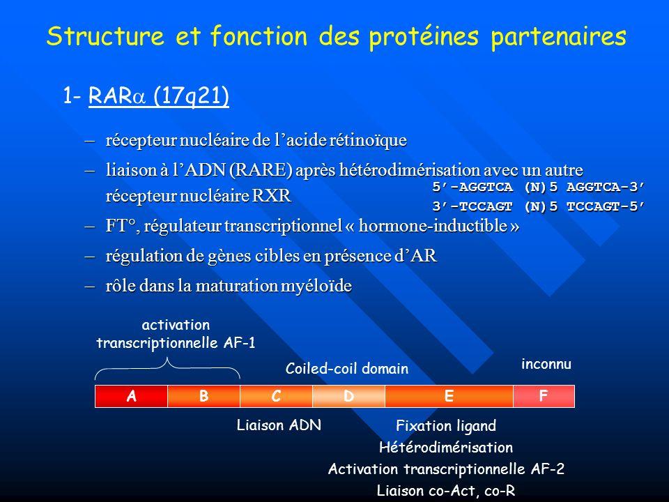 –récepteur nucléaire de lacide rétinoïque –liaison à lADN (RARE) après hétérodimérisation avec un autre récepteur nucléaire RXR –FT°, régulateur trans